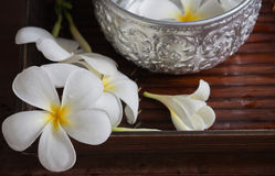 Merlo acquaiolo del fiore e dell'acqua del frangipane Immagini Stock Libere da Diritti
