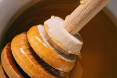Merlo acquaiolo del miele in miele, macro foto dell'alimento Immagine Stock Libera da Diritti
