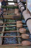 Merlo acquaiolo di legno dell'acqua al santuario di Fushimi Inari a Kyoto, Giappone immagini stock