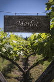 Merlot sign in a vineyard, Argentina. Merlot sign in a vineyard Royalty Free Stock Image