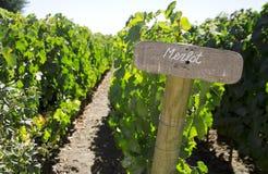 Merlot teken in de wijngaard Stock Fotografie
