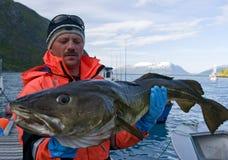 Merluzzo della holding del pescatore Fotografia Stock Libera da Diritti