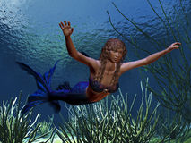 Mermaid. A beautiful blue tailed mermaid swims along a coral reef Royalty Free Stock Photography