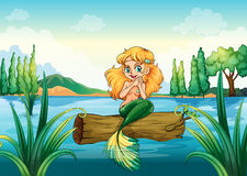 A mermaid above the log Royalty Free Stock Images