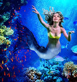 Mermaid dive underwater through coral. Girl mermaid dive underwater through coral fishes royalty free stock photo