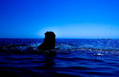 A mermaid emerges from the sea & x28;13& x29; Royalty Free Stock Photos