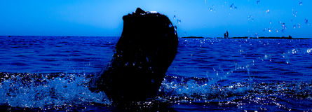 A mermaid emerges from the sea & x28;8& x29; Royalty Free Stock Photo