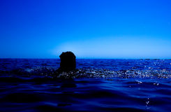 A mermaid emerges from the sea & x28;12& x29; Royalty Free Stock Photos