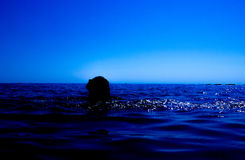 A mermaid emerges from the sea & x28;11& x29; Royalty Free Stock Images