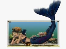 Mermaid in a fishtank Stock Images