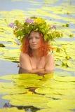 Mermaid i vattnet Arkivbilder