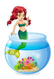 A mermaid inside the aquarium. Illustration of a mermaid inside the aquarium on a white background Royalty Free Stock Photography