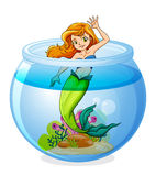 A mermaid inside the bowl. Illustration of a mermaid inside the bowl on a white background Stock Photography