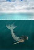 Mermaid, Ocean Sea Fish, Woman Royalty Free Stock Image