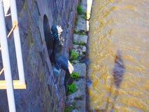 Mermaid statue. Under bridge at old town Vilnia river in Lithuania, Vilnius stock photo
