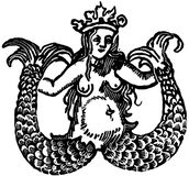 Mermaid with two tails Stock Image
