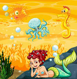 A mermaid under the sea Royalty Free Stock Image
