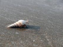mermit螃蟹 免版税库存照片