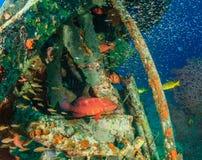 Mero y glassfish alrededor de los restos subacuáticos Imágenes de archivo libres de regalías
