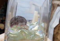Merriami de Dipodomys de rat de kangourou de Merriam de rat de kangourou dormant en verre Photos stock