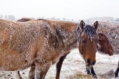 Merrie in de winter Royalty-vrije Stock Afbeelding
