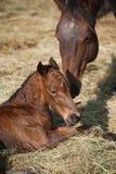 Merrie en pasgeboren veulen royalty-vrije stock foto