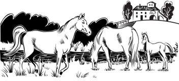 Merrie met haar veulen stock illustratie