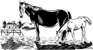 Merrie met haar veulen vector illustratie