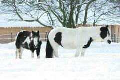 Merrie met veulen samen in de winter royalty-vrije stock foto's