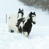 Merrie met veulen samen in de winter royalty-vrije stock fotografie