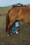 Merrie` s melk in monglia royalty-vrije stock fotografie