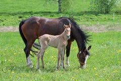 Merrieveulen en moeder stock foto