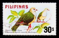 Merrilli di Ptilinopus della colomba della frutta del ` s di Merrill, fauna - serie degli uccelli, circa 1979 Immagine Stock