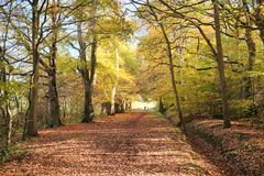 Merrions Wood in Autumn Stock Image