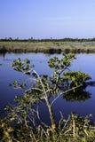 Merritt wyspy rezerwat dzikiej przyrody obrazy stock