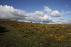 Merrivalegebied van dartmoor nationaal park Devon Royalty-vrije Stock Afbeeldingen