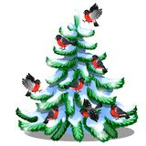 Merry bullfinches sit on a snowy spruce isolated on white background. Sample of Christmas and New year greeting card. Festive poster or party invitations Royalty Free Illustration