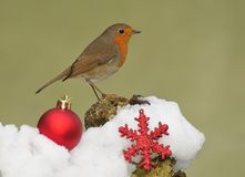Merry Christmas. Christmas card with a robin Royalty Free Stock Image