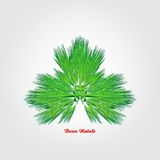 Merry Christmas. Illustration with Christmas tree on white background Stock Photo