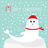 Merry Christmas Candy cane text. White Sea lion. Harp seal pup lying on iceberg ice. Red santa hat, scarf. Cute cartoon character. Stock Image