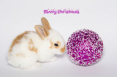 Merry christmas card with bunny and ball. On white background Stock Photography
