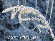 Merry Christmas card done using snowy grass , Lithuania stock photography
