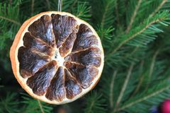 Merry christmas card with dry orange. On the xmas tree Royalty Free Stock Photos
