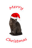Merry christmas cat cap funny Royalty Free Stock Image