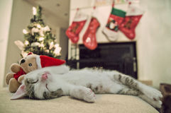 Merry Christmas cat. Kitten under tree. Santa Royalty Free Stock Photo