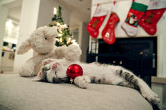 Merry Christmas cat. Kitten under tree, with sheep toy. Santa Royalty Free Stock Photography