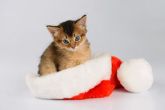 Merry Christmas Cat with Santa hat on white Royalty Free Stock Image