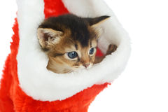 Merry Christmas Cat with Santa hat on white Stock Photo
