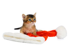 Merry Christmas Cat with Santa hat on white Stock Photos