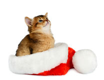 Merry Christmas Cat with Santa hat on white Royalty Free Stock Photos